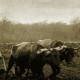 Foto antigua agricultura